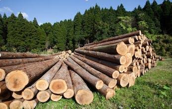 Boomstammen hout